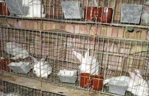 兔子养殖设备