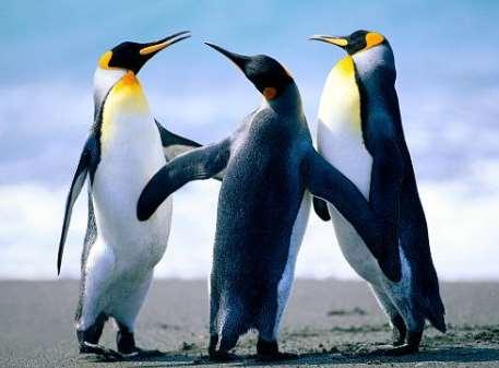 企鹅生活在什么地方