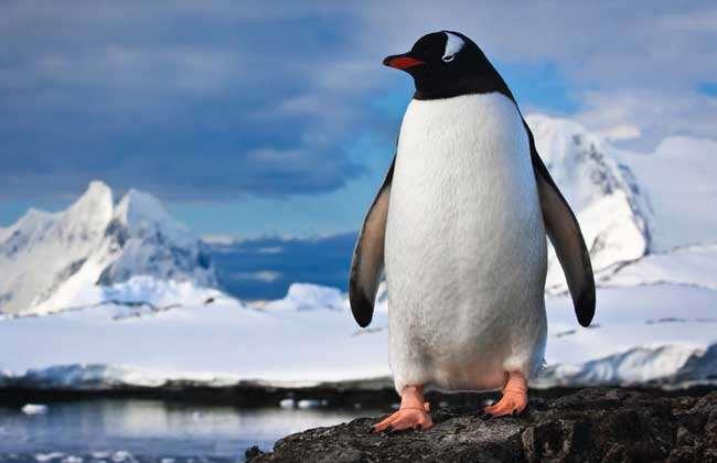 企鹅生活在哪里